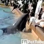 Delfin kontra denerwujący dzieciak