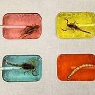 Słodycze... z owadami i skorpionami!