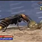 Osa i skorpion - walka na śmierć i życie