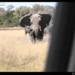 Słoń atakuje samochód