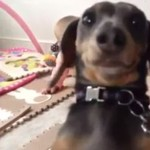 Ten pies ŻĄDA uwagi!