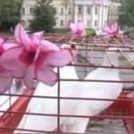 Ruskie wesele z niespodzianką - O MATKO!