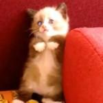 Wystraszone koty - ŚMIESZNE!