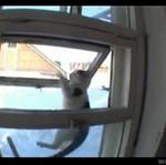 Kot z zadatkami na włamywacza