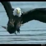 Polowanie orła w zwolnionym tempie