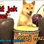 TEMAT DNIA: najfajniejsze psy w sieci