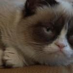Grumpy Cat - historia posępnego kociego celebryty