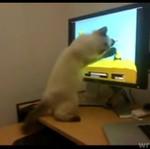 Kociak ma swoją ulubioną grę!