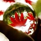 W szklanej kuli - ŚWIETNE ZDJĘCIA!