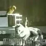 Przebiegła papuga