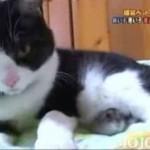 Przyjaźń kota i chomika