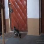 Powrót kota marnotrawnego