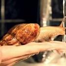 Ślimak bierze kąpiel