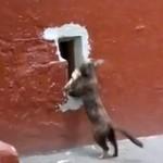 Kot wraca z łupem do domu