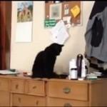 Ostateczny dowód na to, że koty to istoty ZŁE