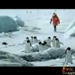 Latające pingwiny!