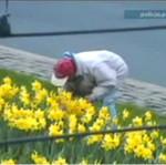PIJANY kradnie kwiaty z trawnika!