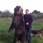 Niedźwiedź, najlepszy przyjaciel człowieka