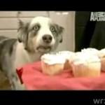 Jak wygląda posłuszny pies, któremu zabroni się jeść?