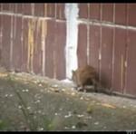 ROSJA - tam szczury jedzą koty!