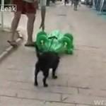 Ratunku, krokodyl!
