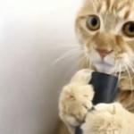Koty kochają odkurzacz!