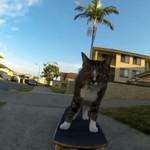 Kot przemierza świat na deskorolce
