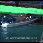 Rzeź delfinów w Japonii - OKRUTNE!