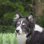 Ten pies gra w siatkówkę lepiej niż Ty!