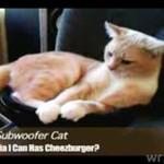 Kot kontra potężne basy