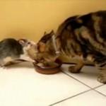 Kot i szczur dzielą się miską