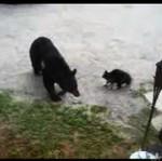 Niedźwiedź versus kot - AWANTURA!