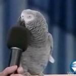Najmądrzejsza papuga świata!