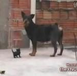 Malutki kotek pokonał rottweilera!