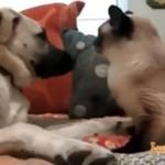 Kociak POBIŁ psa!