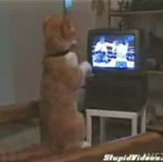 Kot ogląda boks!