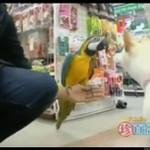 Papuga, która... szczeka jak pies!