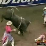 Byk poturbował kowboja!