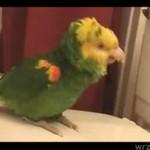 Uważajna to, co ogląda i czego słucha twoja papuga!