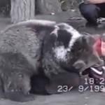 Dzieciak WALCZY z niedźwiedziem!