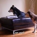 O czym dyskutują psy?