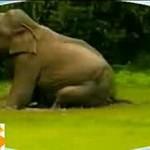 Zabawna kompilacja z udziałem słoni