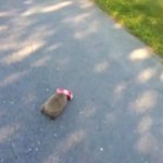 Słodki jeżyk bawi się puszką