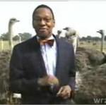Śmieszny reporter i strusie