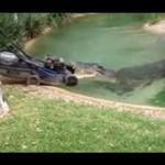 Aligator znalazł nowego przyjaciela