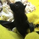 Kolekcjoner SŁODKOŚCI - karmienie osieroconych nietoperzy