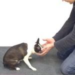Magia dla psów - tak reagują!