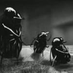 Mucha nie siada