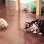 Kotek spotyka jeżyka - SŁODKIE!