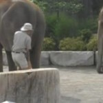 Wspinaczka na słonia - O MATKO...